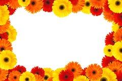 рамка цветка маргаритки Стоковая Фотография