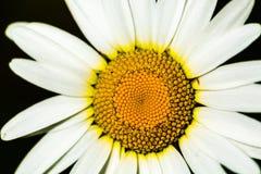 Рамка цветка полная, фотография макроса Стоковое Изображение
