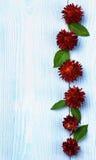 Рамка цветка соломы Стоковое Фото