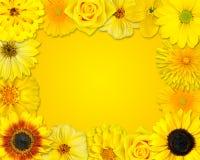 Рамка цветка с желтыми цветками на померанцовой предпосылке Стоковое Фото