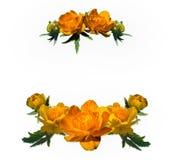 Рамка цветка цветков глобуса Стоковые Изображения RF