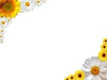 рамка цветка Стоковое Изображение RF