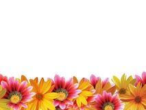 рамка цветка Стоковые Изображения RF
