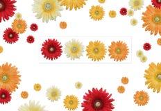рамка цветка Стоковое Фото