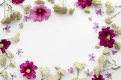 Рамка цветка wildflowers на белой предпосылке Плоское положение, взгляд сверху флористический шаблон литерности модель-макета Стоковая Фотография RF