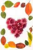 Рамка цветков и листьев Стоковые Фотографии RF