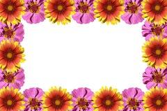 рамка цветков стоковые изображения rf