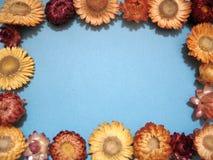 рамка цветков Стоковое Изображение RF