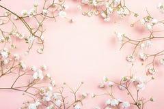 Рамка чувствительных маленьких белых цветков на розовой предпосылке от a Стоковая Фотография