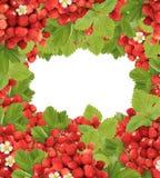 Рамка ягоды Стоковые Изображения