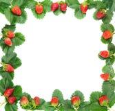 Рамка ягод и листьев клубники Стоковая Фотография
