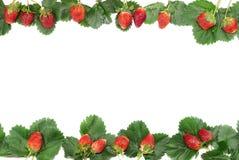 Рамка ягод и листьев клубники Стоковое Фото