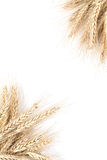 Рамка ячменя Стоковая Фотография RF