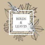 Рамка для текста с листьями и птицами в квадрате Красивые голубые синицы на предпосылке листьев осени вектор Стоковые Фото