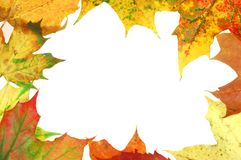 Рамка #3 листьев Стоковое Фото