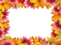 рамка 3 цветков Стоковая Фотография RF