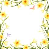 рамка daffodil иллюстрация штока