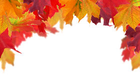 Рамка Multicolor кленовых листов осени половинная Стоковое фото RF