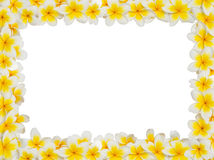 Рамка Plumeria Стоковое Изображение