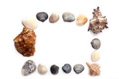 Рамка seashells Стоковое Изображение RF
