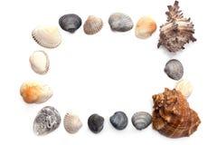 Рамка seashells Стоковые Изображения RF