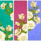 Рамки белой розы вектора Комплект флористических вертикальных знамен иллюстрация штока