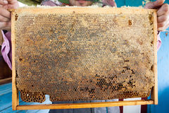 Рамки крапивницы пчелы Beekeeper жать мед Курильщик пчелы использован для того чтобы утихомирить пчел перед рамкой ульев Стоковое Фото