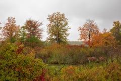 Рамки листьев осени убежище птицы в острове Presque стоковая фотография rf