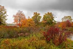 Рамки листьев осени убежище птицы в острове Presque стоковые фотографии rf
