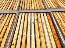 Рамки меда Стоковое фото RF