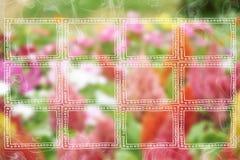 Рамки на предпосылке цветка Стоковые Фотографии RF