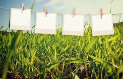 Рамки поляроида фото вися на веревочке над полем лета благоустраивают предпосылку Стоковые Фото