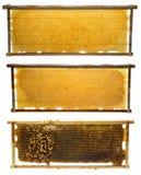 Рамки пчелы с выводком меда и пчелы Стоковое Фото