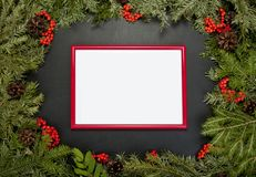 Рамки рождества с вечнозеленой елью, конусами, ягодой a падуба Стоковые Изображения