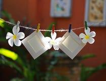 Рамки фото на веревочке с цветком стоковое фото rf