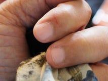 Рана которая причинена острым отрезком на указательном пальце кровоточит стоковое изображение