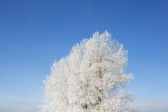 раненная зима вала пущи березы Стоковое Фото