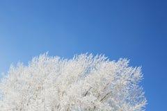 раненная зима вала пущи березы Стоковое фото RF