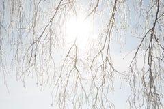 раненная зима вала пущи березы Стоковые Фото
