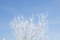 раненная зима вала пущи березы Стоковое Изображение