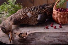 Раненый охотник дикой утки Стоковые Фото