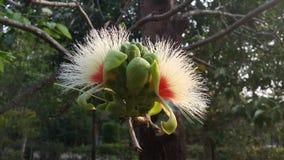 Раннее лето приносит красоту к цветкам стоковое изображение