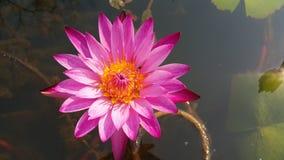 Раннее лето приносит красоту к цветкам стоковое фото rf