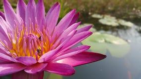 Раннее лето приносит красоту к цветкам стоковое изображение rf