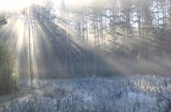 Раннее утро в последней осени Стоковая Фотография