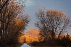 Раннее утро Солнце на Treetops стоковое фото rf
