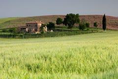 раннее утро Тоскана стоковое изображение rf