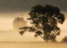 раннее утро Стоковые Изображения