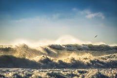 Рано утром восход солнца над морем и чайкой летящей птицы Стоковые Изображения RF