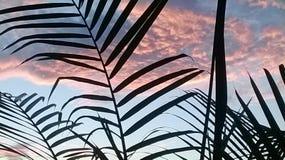 Рано утром восход солнца с образованием облака Стоковые Изображения RF